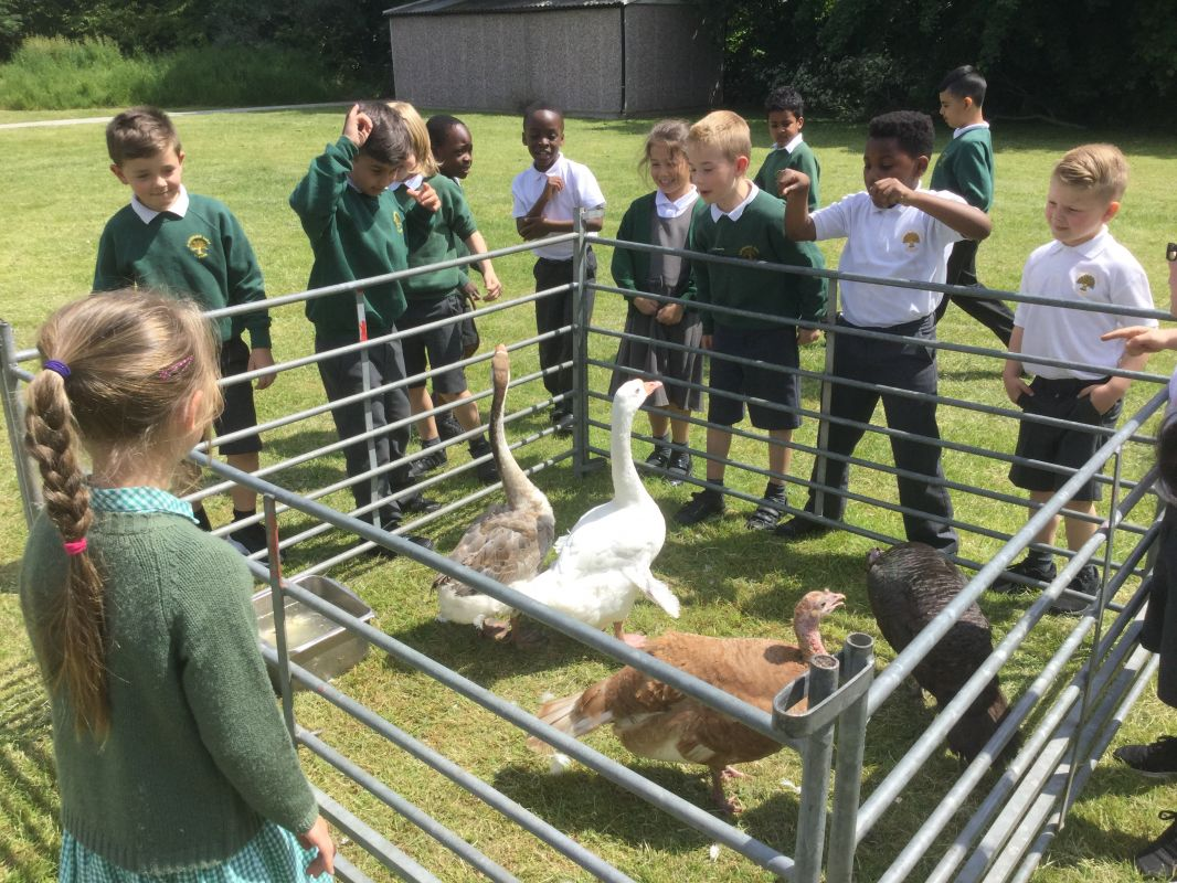 Farm Visit >> Wellgate Farm Visit Year 2 - May 2016 - Parsonage Farm Primary School